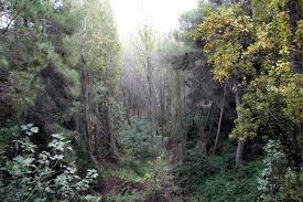 Recuperar el bosque mediterráneo