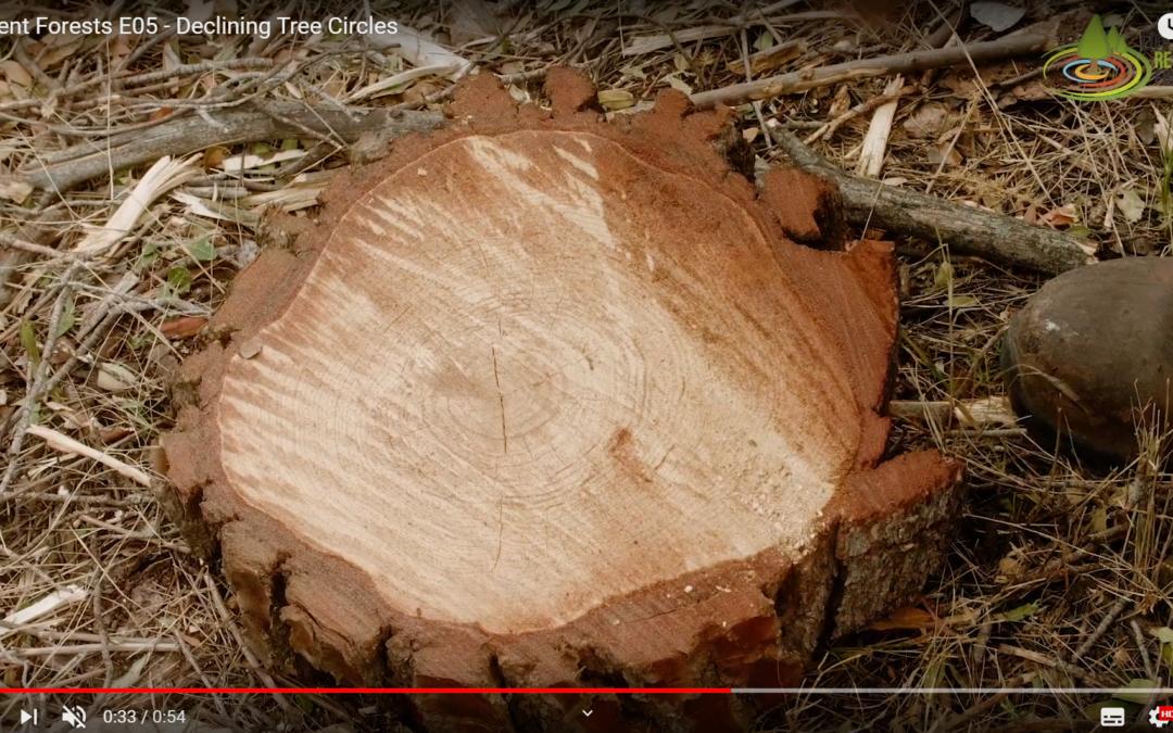 Declining Tree Circles – Episode 5