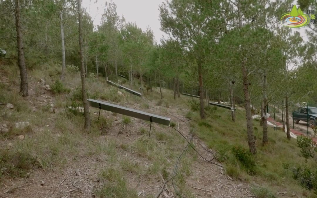 Visiting the Experimental Forest Plots – Episode 6