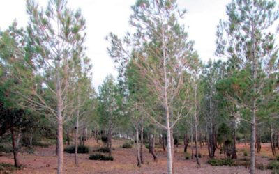 Eco-hydrologic forest management improves soil conservation in semiarid regions