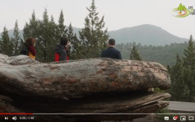 The Big Old Tree – Resilient Forests Video Series Episode 3