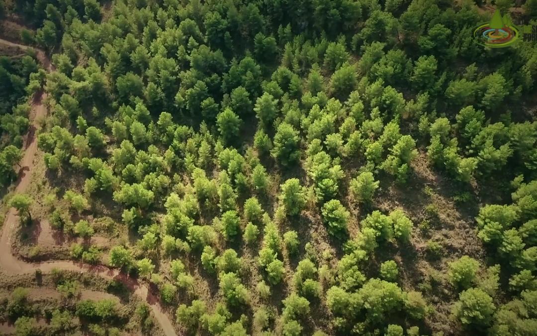 Managed Forests Versus Unmanaged – Episode 4