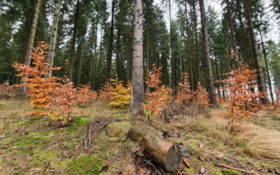 Forest Management should be at the heart of upcoming EU Strategy