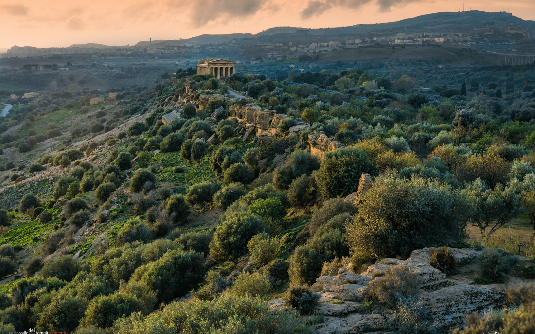 The state of Mediterranean forests: How can we improve?